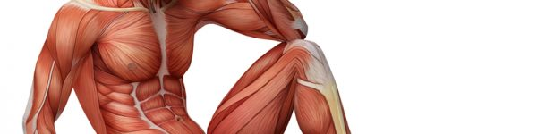 Curso de Anatomia Palpatória – Avaliação e Tratamento de Disfunções – Nível II