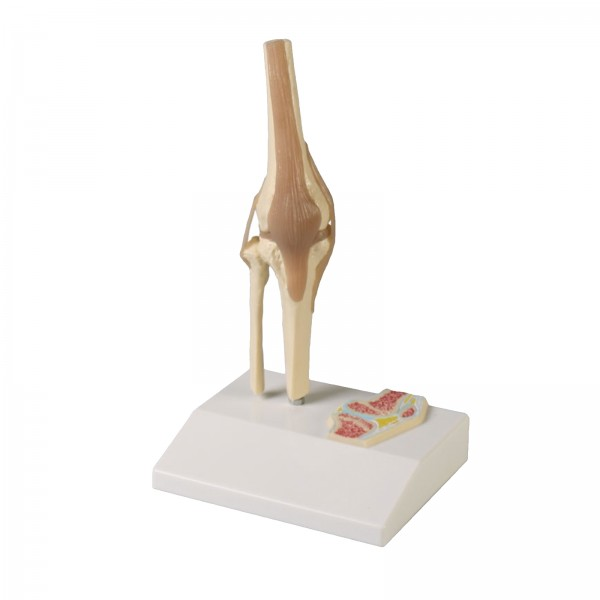 Articulação do joelho – Mod. 4522